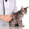 Ветеринарные клиники в Медведево